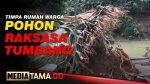 VIDEO : POHON BESAR TUMBANG TIMPA RUMAH WARGA