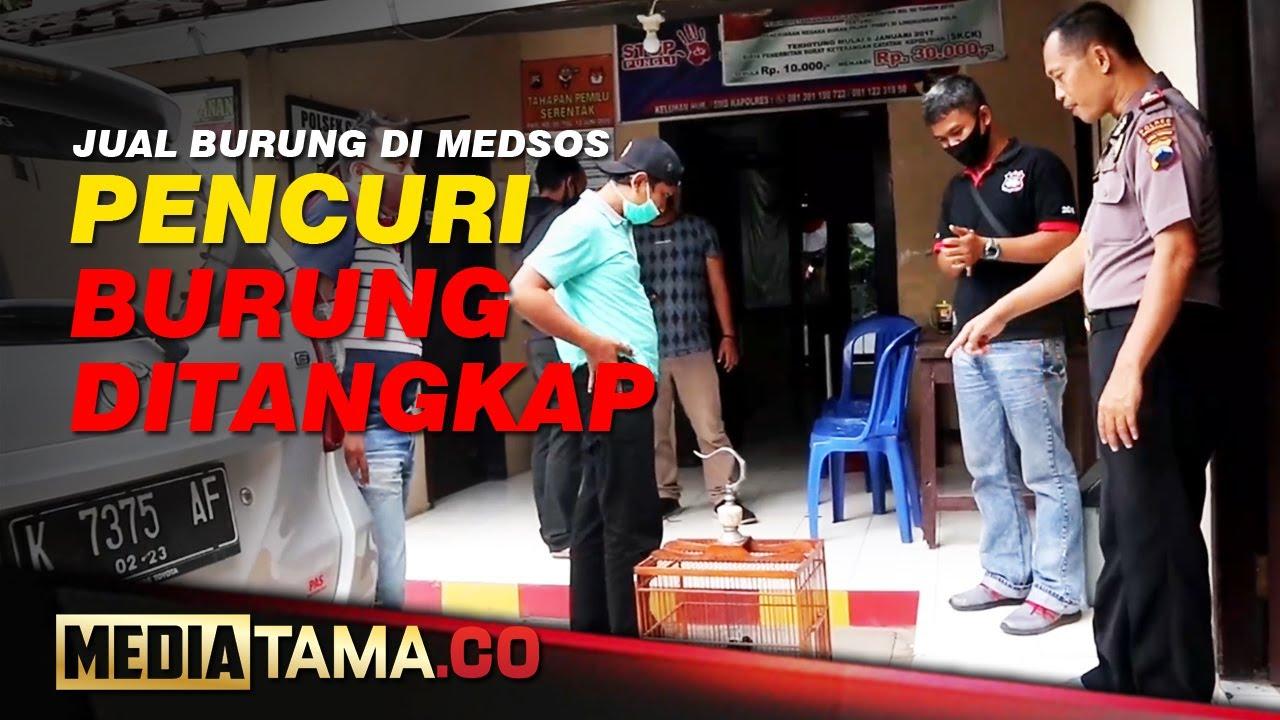 VIDEO : JUAL BURUNG DI MEDSOS, PENCURI DITANGKAP POLISI