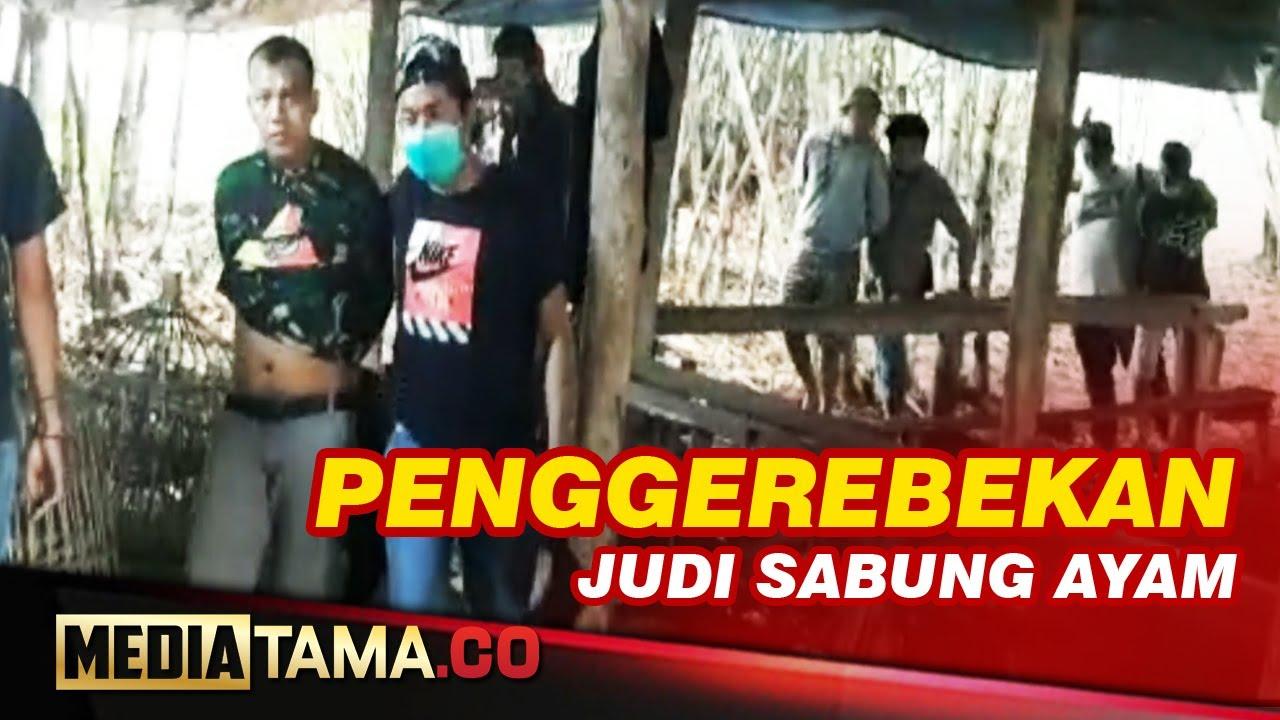 VIDEO : TIM RESMOB POLRESTABES SEMARANG GREBEG SABUNG AYAM DI TENGAH HUTAN MIJEN